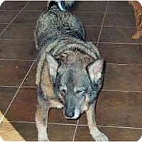 Adopt A Pet :: Alex - Scottsdale, AZ