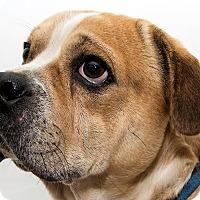 Adopt A Pet :: Dinazzio - Cumberland, MD