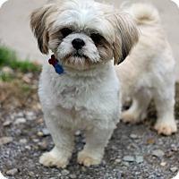 Adopt A Pet :: Oliver - Tinton Falls, NJ