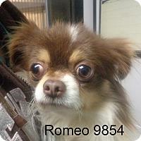 Adopt A Pet :: Romeo - baltimore, MD