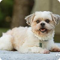 Adopt A Pet :: Henry - Salem, OR
