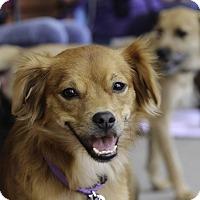Adopt A Pet :: Sydney - Alpharetta, GA