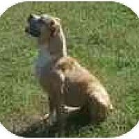 Adopt A Pet :: Hannah - Brentwood, TN