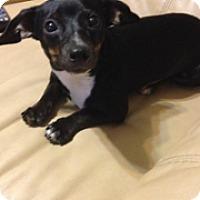 Adopt A Pet :: Bonnie - Crowley, LA