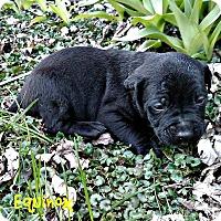 Adopt A Pet :: Equinox - Garden City, MI