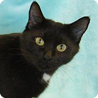 Adopt A Pet :: Snow White - Colorado Springs, CO