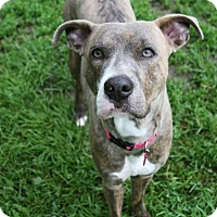 Adopt A Pet :: BELLAMY - Morgantown, IN