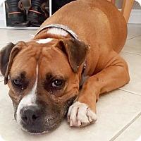 Adopt A Pet :: Klondike - San Diego, CA