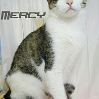 Adopt A Pet :: Mercy - Baton Rouge, LA