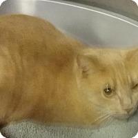 Adopt A Pet :: Maggie - Columbus, OH