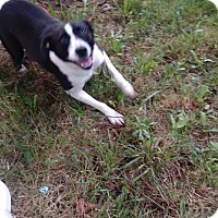 Adopt A Pet :: Ziva - Kendall, NY