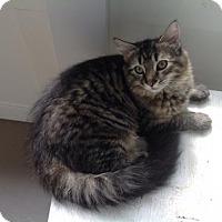 Adopt A Pet :: Sweetie pie - Harrisburg, PA