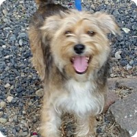 Adopt A Pet :: Rex - Fresno, CA