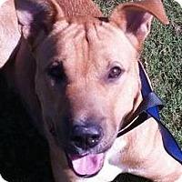 Adopt A Pet :: Mac - Hanover, PA