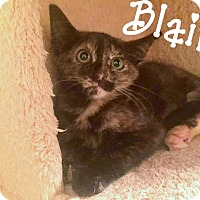 Adopt A Pet :: Blair - Homewood, AL