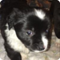 Adopt A Pet :: Marie - Reno, NV