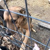 Adopt A Pet :: Nora - Rockville, MD