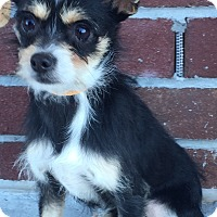 Terrier (Unknown Type, Medium) Mix Dog for adoption in Summerville, South Carolina - Holly