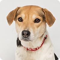 Adopt A Pet :: Lovee - Westfield, NY