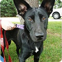 Adopt A Pet :: Lady - FOSTER ME! - Detroit, MI