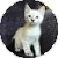 Adopt A Pet :: Tut - Ft. Lauderdale, FL