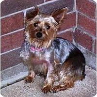 Adopt A Pet :: Ava - Conroe, TX
