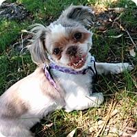 Adopt A Pet :: Jasmine - Hamilton, ON