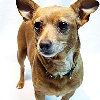 Adopt A Pet :: Pumpkin - Marietta, GA