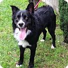 Adopt A Pet :: LINC