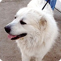 Adopt A Pet :: Max - Bloomington, IL