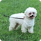 Adopt A Pet :: BOOCHIE