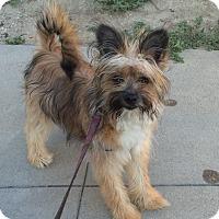 Adopt A Pet :: Suki - Santa Ana, CA