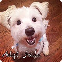 Adopt A Pet :: Frida is Fabulous - Los Angeles, CA