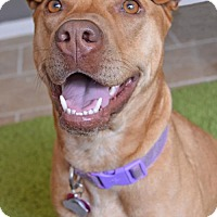 Adopt A Pet :: Leah - Independence, MO