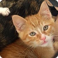 Adopt A Pet :: PJ - San Fernando Valley, CA