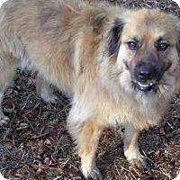 Adopt A Pet :: Merry Merry - Ravenel, SC