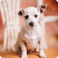 Adopt A Pet :: PeeWee - Portland, OR