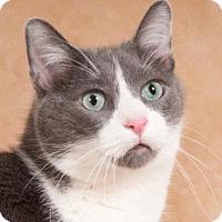 Adopt A Pet :: Nicole - Oak Park, IL