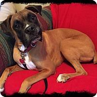 Adopt A Pet :: Mel - Woodbury, MN