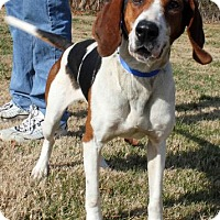 Adopt A Pet :: Lula - Erwin, TN
