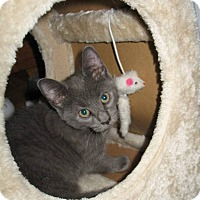 Adopt A Pet :: Lily - Queensbury, NY