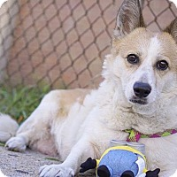 Adopt A Pet :: Bibi - Brooklyn, NY
