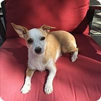 Adopt A Pet :: Calissa - Brea, CA