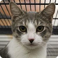 Adopt A Pet :: Mario - Sarasota, FL