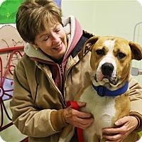 Adopt A Pet :: Serious - Elyria, OH