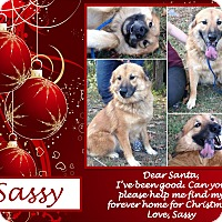 Adopt A Pet :: Sassy - Ringwood, NJ