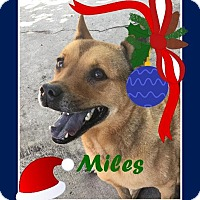 Adopt A Pet :: Miles - Friendswood, TX