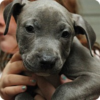 Adopt A Pet :: Mistress - Fort Madison, IA