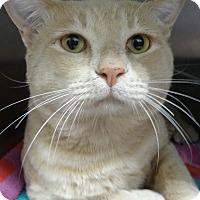Adopt A Pet :: CRUSH - Tucson, AZ