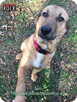 Shepherd (Unknown Type)/Hound (Unknown Type) Mix Dog for adoption in New York, New York - Sam